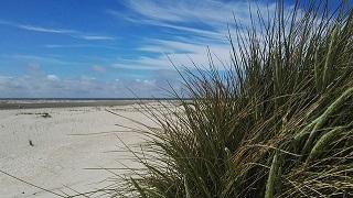 BEACH-sml